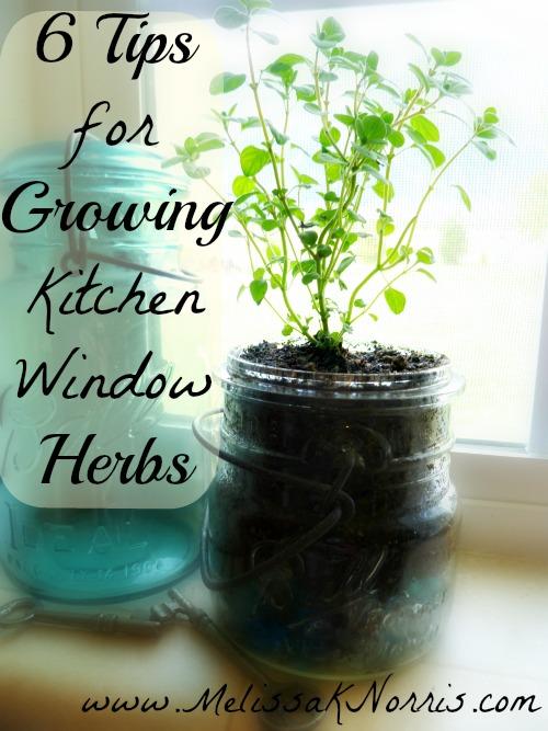6herbgrowingtips