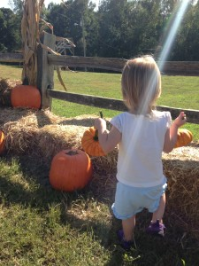 Lucy pumpkins 2